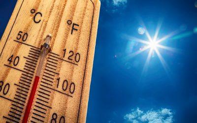Survive the Summer Heat